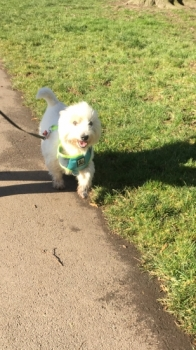 MILO passed with Good-to-go-Walkies