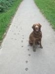 Milo & His Paws! passed with Good-to-go-Walkies